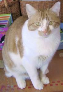 Feline Veterinarian